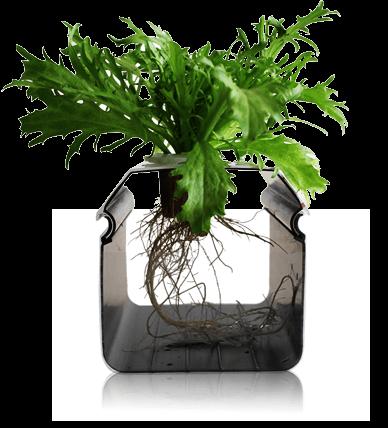 荣成农业把种植当成技术 · 做成艺术