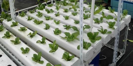 家庭无土栽培蔬菜,简单便捷,你值得拥有!