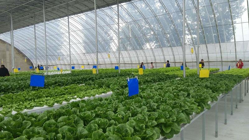 北京 蔬乐管 叶菜类水培管道 SGD090050 34