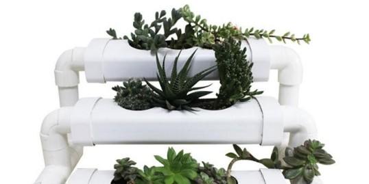 疫情过后,你办公室的植物还好吗?