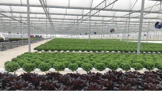 你知道吗,无土栽培设备种的菜,是有特殊销售渠道的!