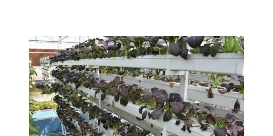 温室农业的3大转型!快看看吧!