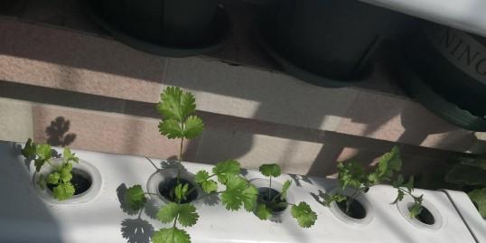 植树节,你有一个栽种树苗的想法吗?