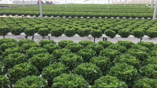 无土栽培蔬菜种不好?原因在这里!再忙也要看看!