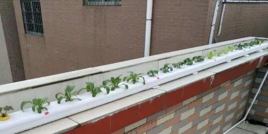 阳台管道水培蔬菜,原来还可以这样种菜!