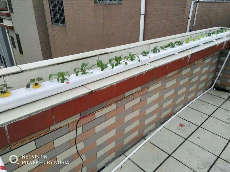 阳台管道水培蔬菜