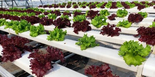中国农业发展3大方向,你看好吗?