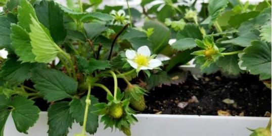 简单干净的家庭种植方法:无土水培