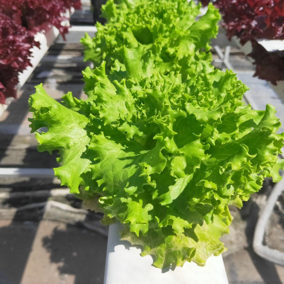 水培蔬菜种植,还是要选对水培种植管道!