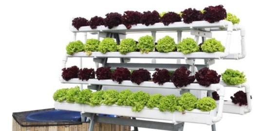 鱼菜共生种植系统,原来优点有这么多!