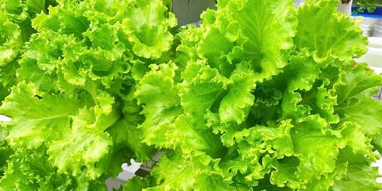 不要再羡慕李子柒了,我们在家也可以种新鲜的蔬菜哟!