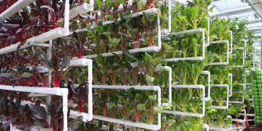 这3种蔬菜的无土栽培,一定要尝试下哦!
