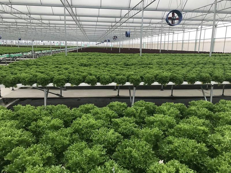 无土栽培种菜