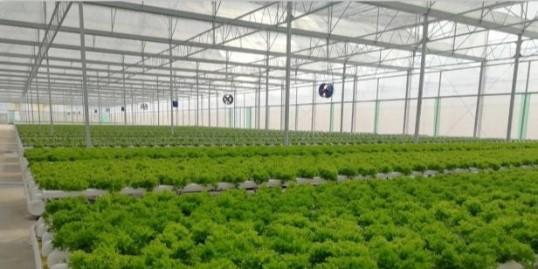 玻璃温室如何做无土栽培,无土栽培的分类有哪些?