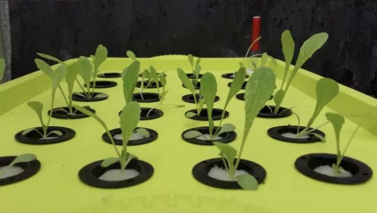图:南通荣成农业 24水培孔种植箱