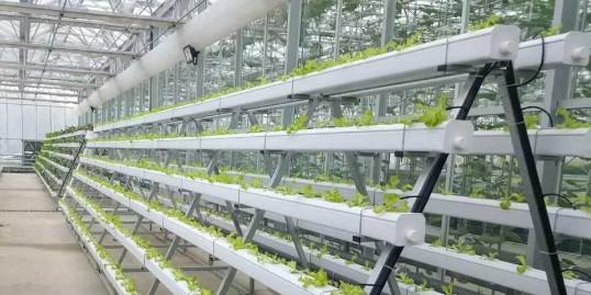 未来的趋势——分享农业