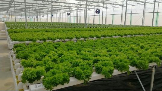 这样种菜,还不如无土栽培水培种植!