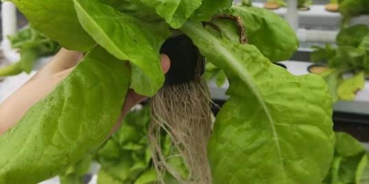 无土栽培定植篮,该如何选择?
