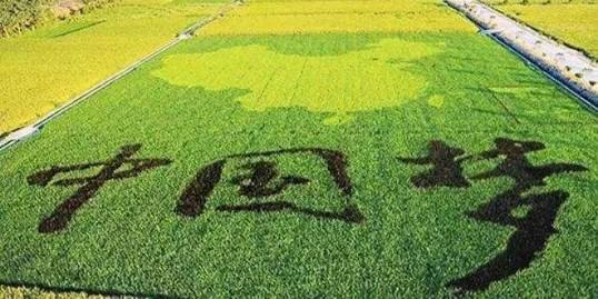 做农业太难了?是你不懂这7点!