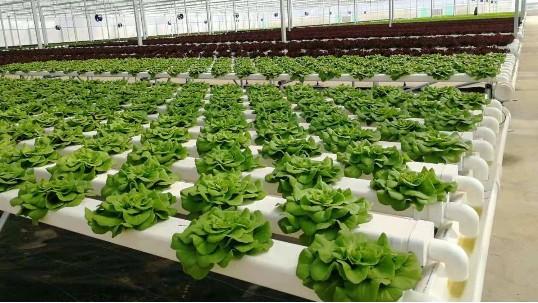 水培蔬菜怎么种?