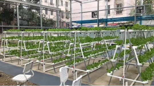 这样的立体无土栽培设备,你还在犹豫么?