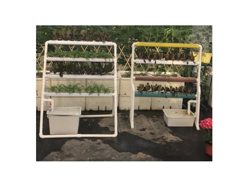 阳台种菜采用水培可提高安全性