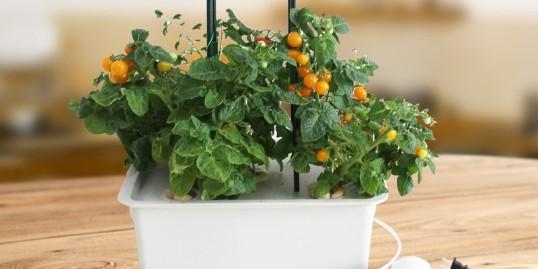 想要学习无土栽培,从种植箱开始!
