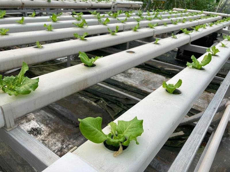 无土栽培 水培管道 水培蔬菜