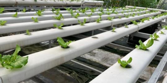 2020下一场农业投资机会在哪?看准无土栽培行业!