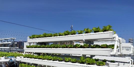 蔬菜立体栽培架,你选的对吗?