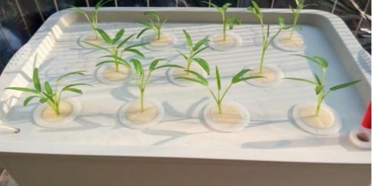 阳台水培蔬菜,超简单超好学!
