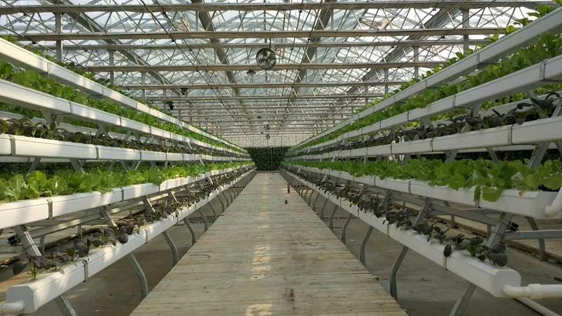 图:无土栽培 水培管道 水培蔬菜
