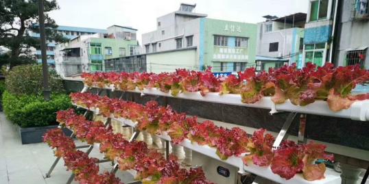 屋顶种植蔬菜,你还在纠结用什么种吗?