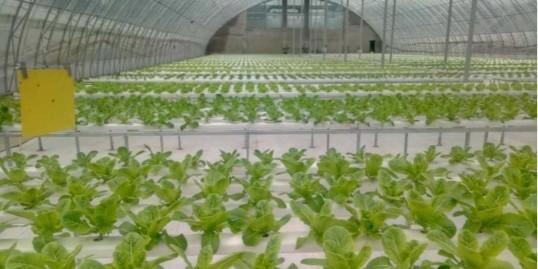 这么多的水培蔬菜相继推向市场安全吗?