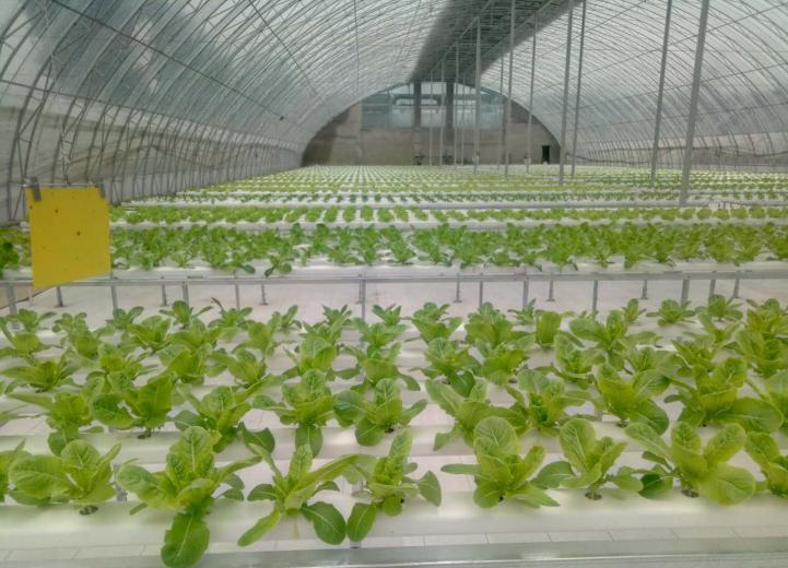 荣成农业 1蔬乐管无土栽培管道种植案例
