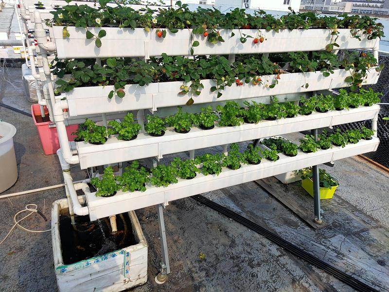 图: 立体蔬菜种植架 无土栽培蔬菜