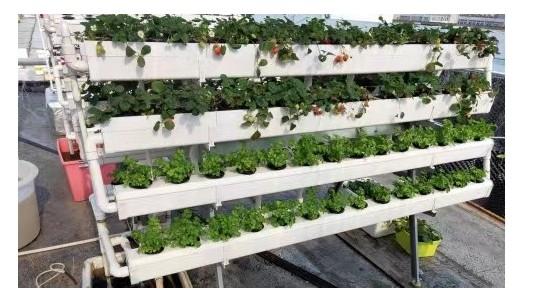 多地蔬菜冻害,那就在家无土在栽培蔬菜!