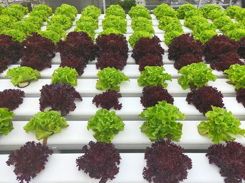 阳台蔬菜种植用蔬乐管水培管道