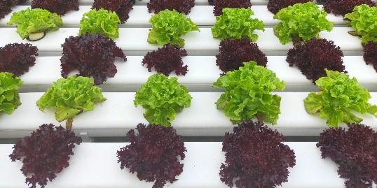 阳台蔬菜—我镜头里的春意