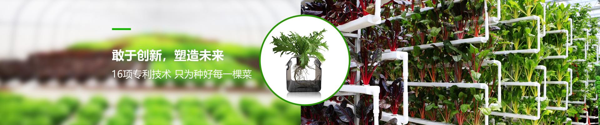 荣成农业水培装置-16项专利技术 只为种好每一棵菜