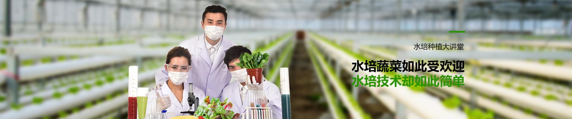 荣成农业-水培蔬菜如此受欢迎,水培技术却如此简单