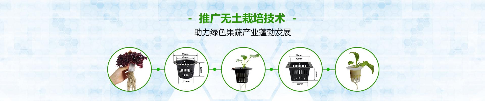 荣成农业无土栽培定植篮-助力绿色果蔬产业蓬勃发展