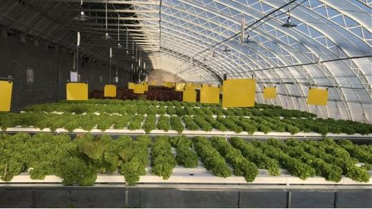无土栽培水培设备厂家,擦亮眼睛这么选!