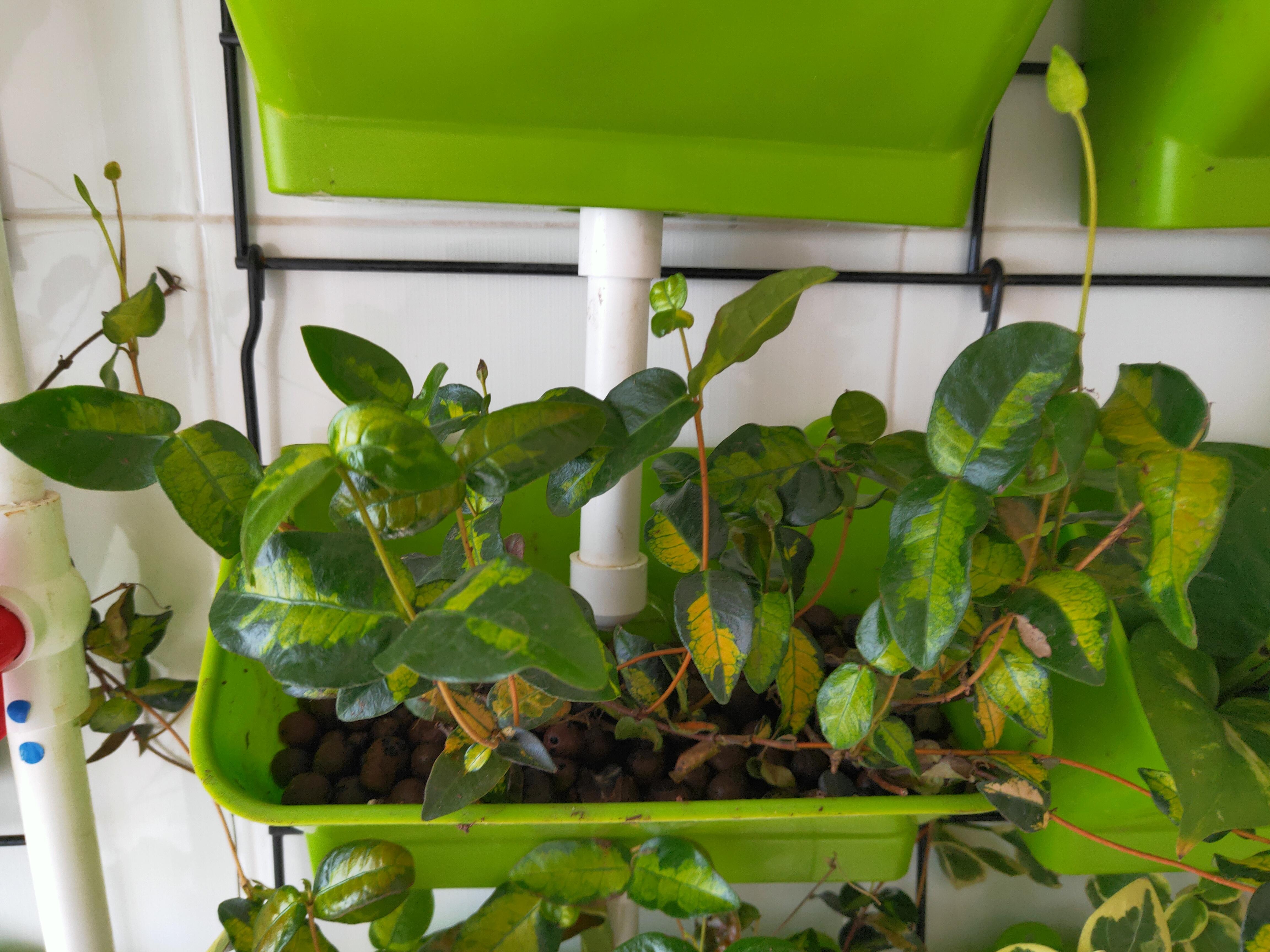 室内立体绿植种植架,可以选择它!