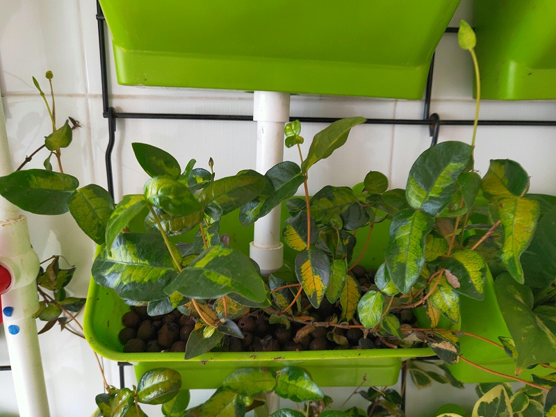 图:南通荣成农业 室内立体绿植种植架