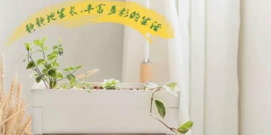 小朋友你是否有很多问号?为什么你的植物都养不好?