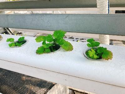 无土栽培架种菜,跟虫子说拜拜!