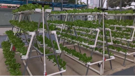 立体无土栽培设备,你了解过吗?