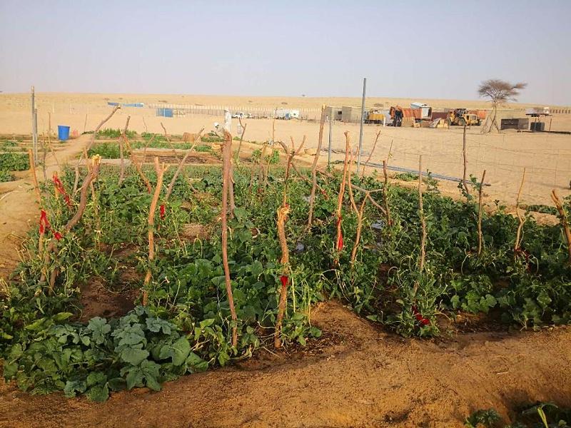 沙漠 种植