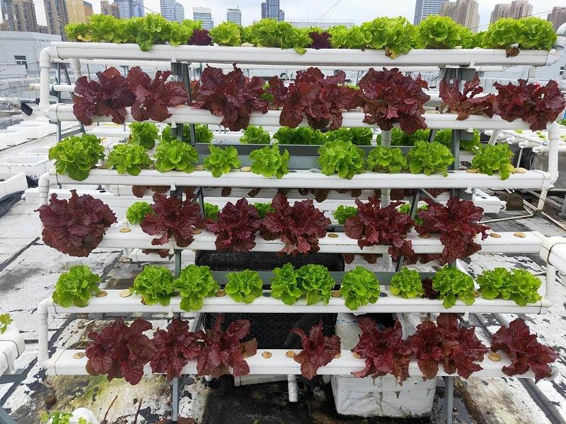 屋顶管道水培蔬菜